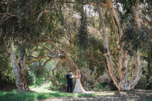 bride and groom under tree along the coast in California
